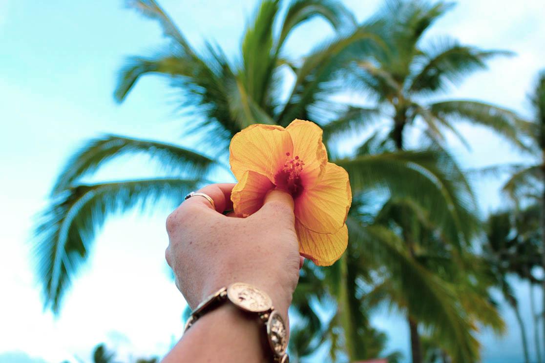 Oahu Hibiskus
